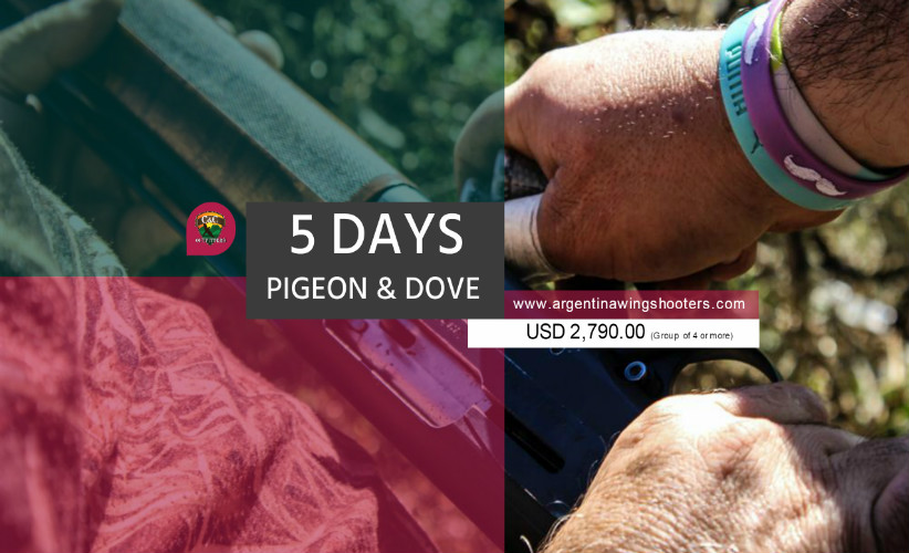 Argentina pigeon hunting