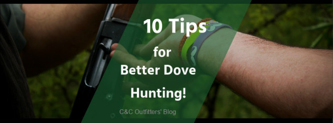 Argentina Better Dove Hunting
