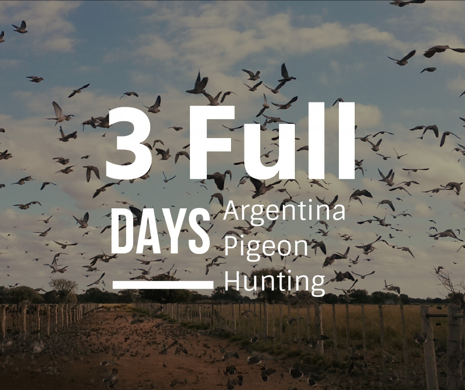 3 full days pigeon argentina hunting