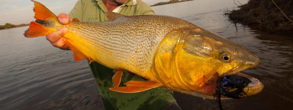 rio-parana-flyfishing-golden-dorado C&C Outfitters