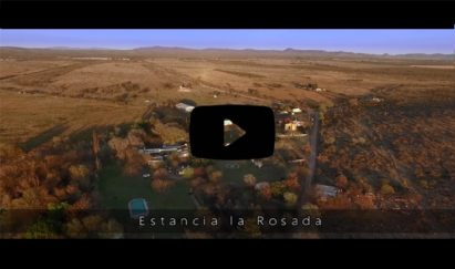 dove-hunting-video-in-cordoba-argentina