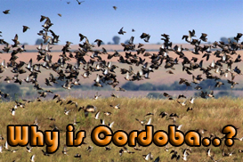 why-is-cordoba-argentina-a-great-destination-for-dove-hunting-3